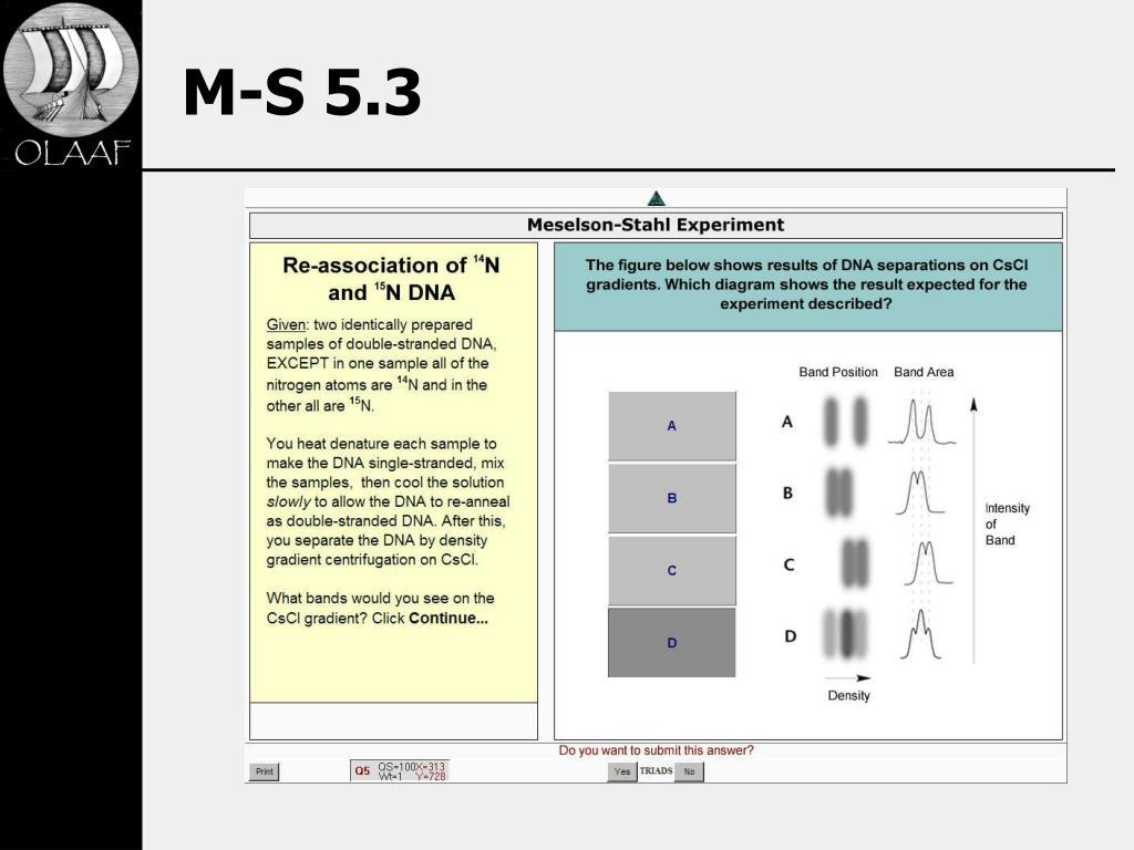 M-S 5.3