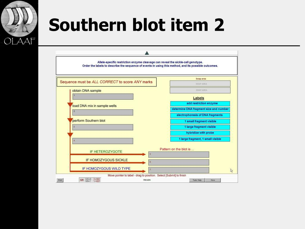 Southern blot item 2