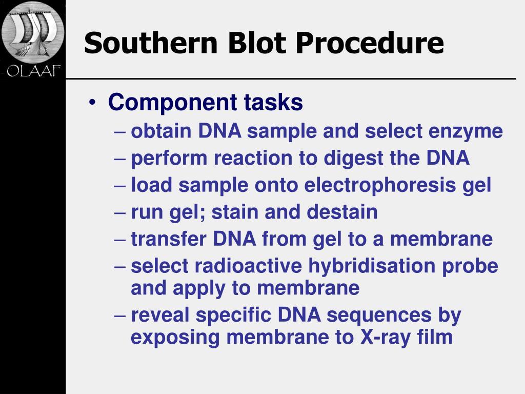 Southern Blot Procedure