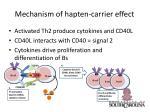 mechanism of hapten carrier effect11