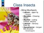 class insecta24
