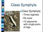 class symphyla