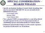 special consideration beaked whales