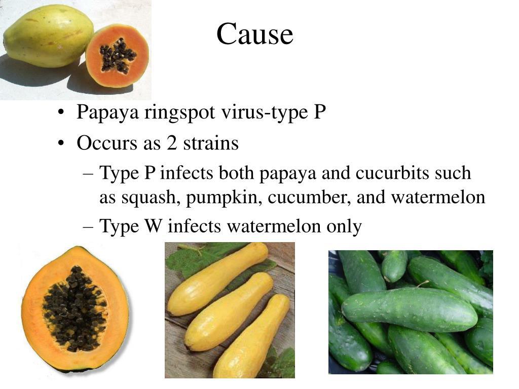 NCSU PDIC: Sample of the Week: Papaya Ringspot Virus on
