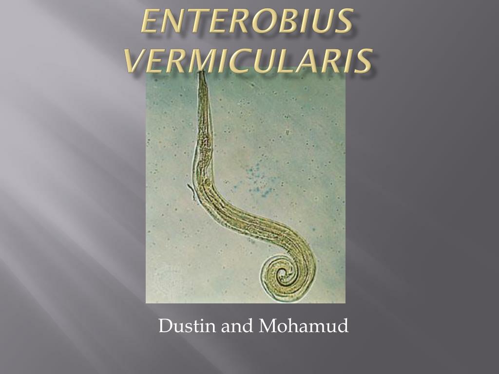 enterobius vermicularis l.
