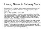 linking genes to pathway steps