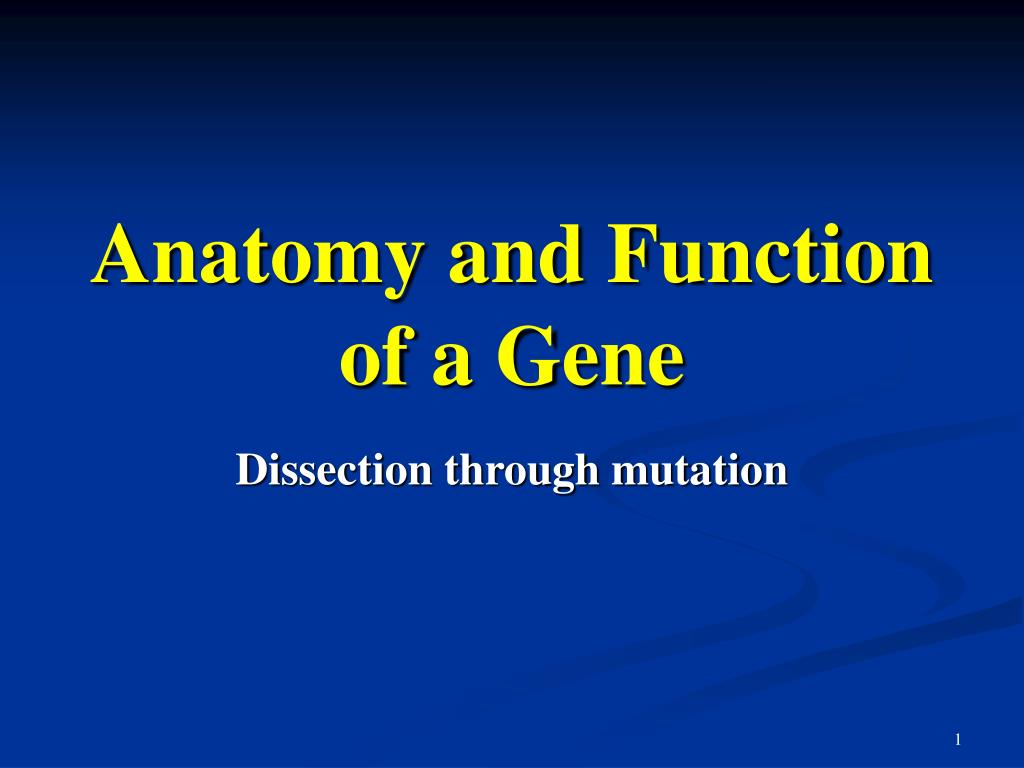 anatomy and function of a gene l.