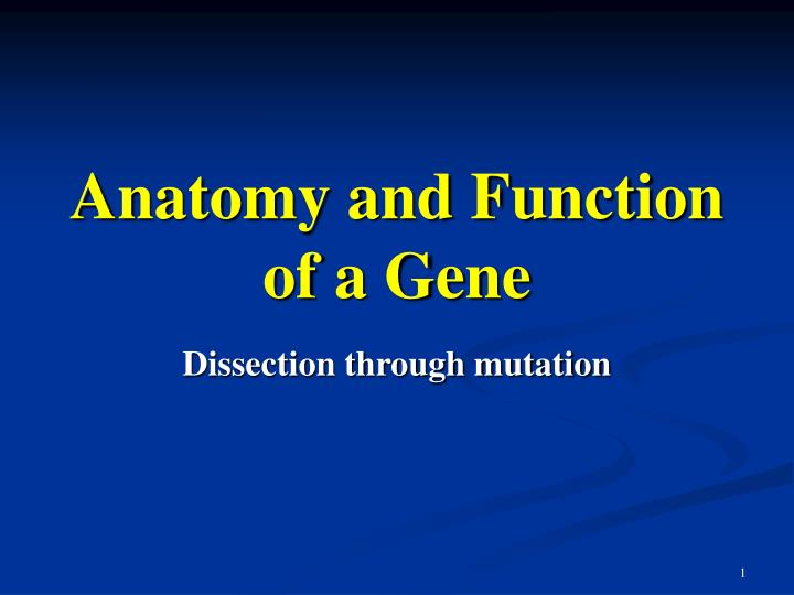 anatomy and function of a gene n.