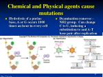 chemical and physical agents cause mutations