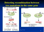 detecting recombination between two mutations in the same gene