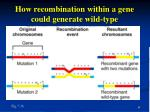 how recombination within a gene could generate wild type