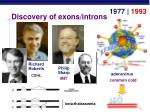 discovery of exons introns