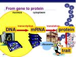 from gene to protein27
