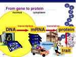from gene to protein35