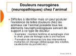 douleurs neurog nes neuropathiques chez l animal