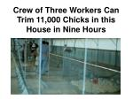 crew of three workers can trim 11 000 chicks in this house in nine hours