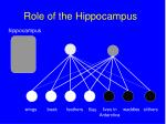 role of the hippocampus