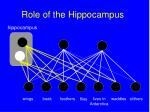 role of the hippocampus140