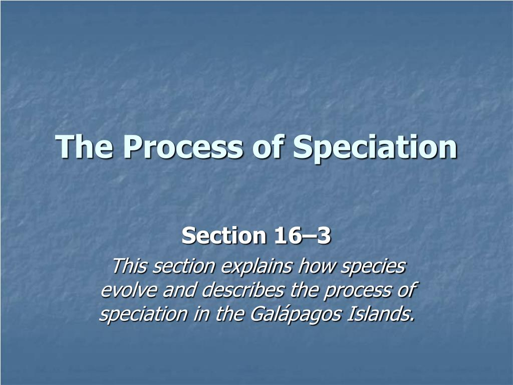the process of speciation l.