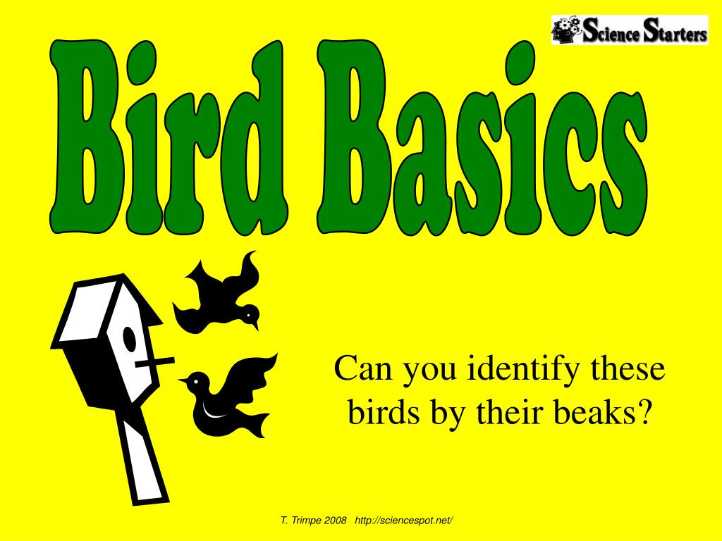 can you identify these birds by their beaks l.