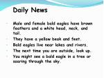 daily news113