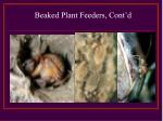 beaked plant feeders cont d