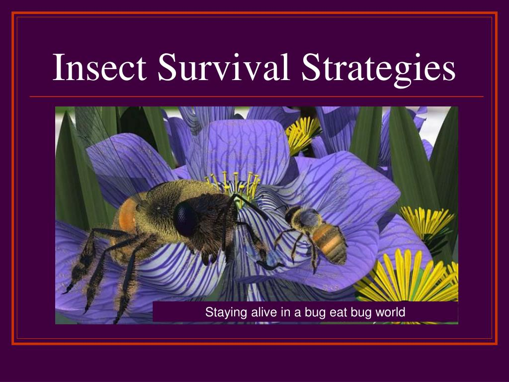 insect survival strategies l.