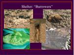shelter burrowers
