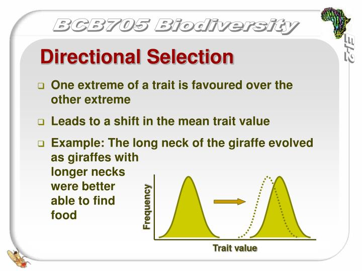 Ppt Evolution Selection And Speciation Powerpoint Presentation