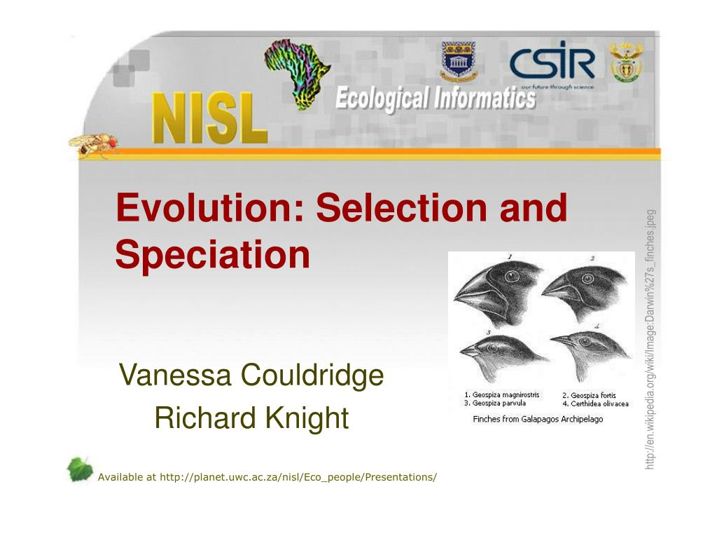 evolution selection and speciation l.
