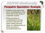 parapatric speciation example