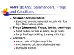 amphibians salamanders frogs and caecillians14