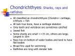 chondrichthyes sharks rays and ratfishes