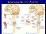 autonomic nervous system49
