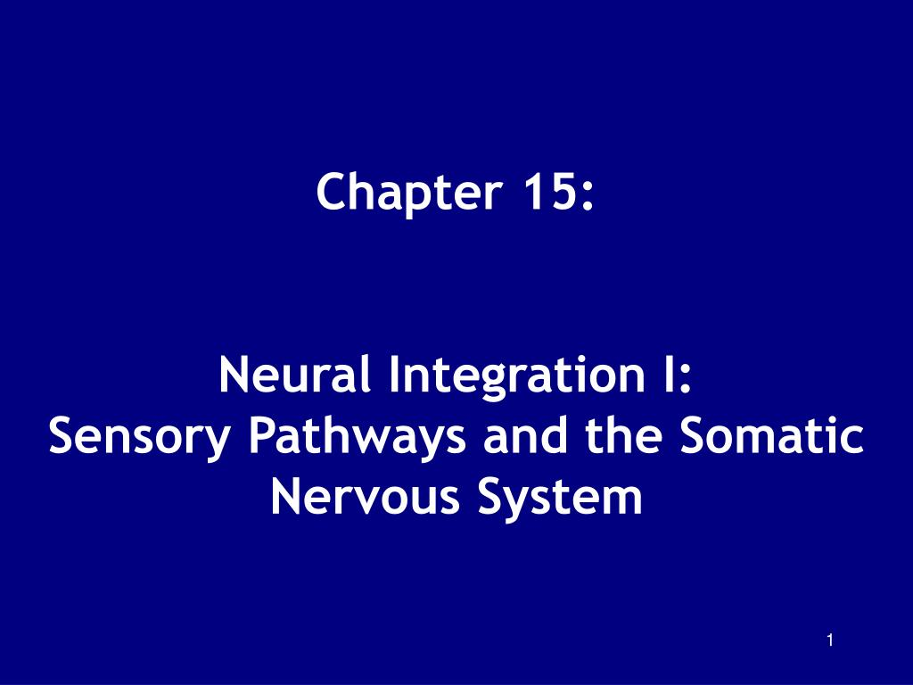chapter 15 neural integration i sensory pathways and the somatic nervous system l.