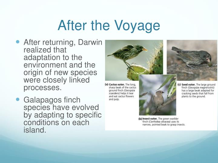 After the Voyage