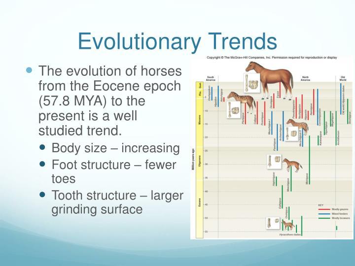 Evolutionary Trends
