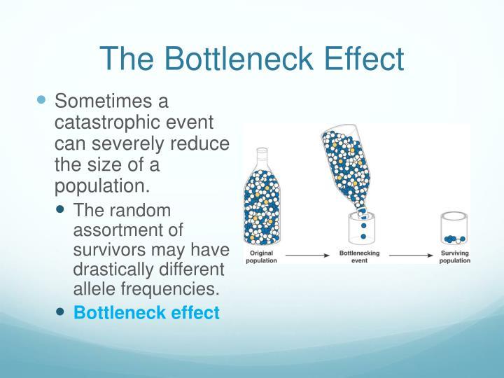 The Bottleneck Effect