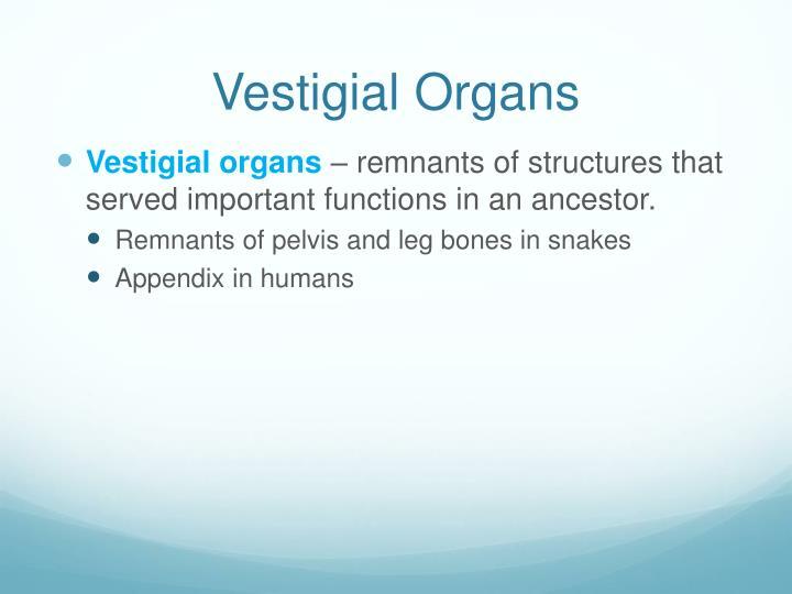 Vestigial Organs
