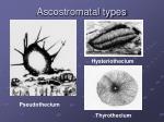 ascostromatal types