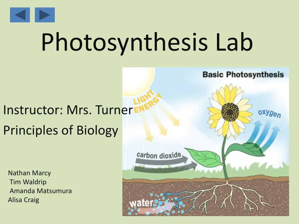 photosynthesis lab l.