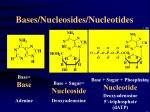 bases nucleosides nucleotides