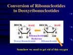 conversion of ribonucleotides to deoxyribonucleotides