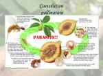 coevolution pollination15