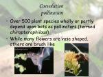 coevolution pollination16