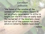 coevolution pollination8