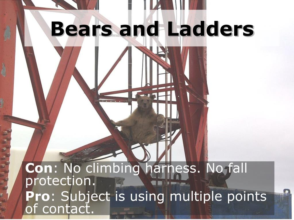 bears and ladders l.