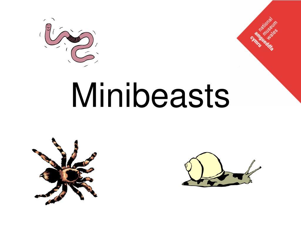 minibeasts l.