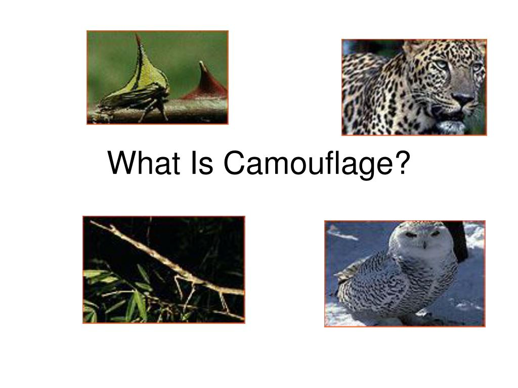 what is camouflage l.