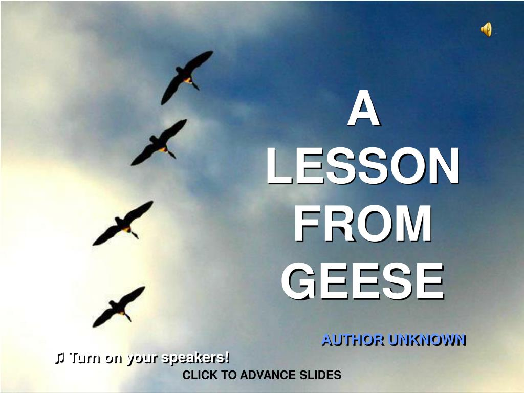 a lesson from geese l.